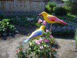 Птица декоративная